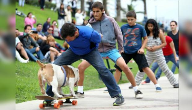 Otto, el perro peruano skater, es noticia central para YouTube - 1