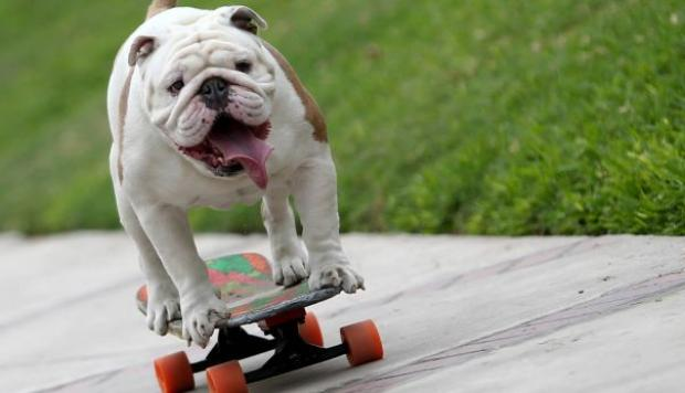 Otto, el perro peruano skater, es noticia central para YouTube - 2