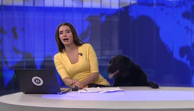 Perro interrrumpe noticiero en Rusia #VIDEO