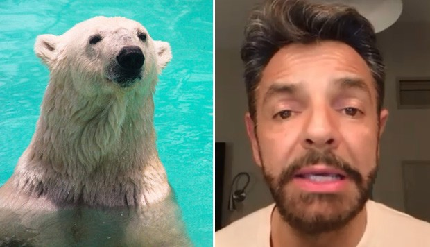 Facebook viral: Eugenio Derbez suplica para salvar a una osa polar | Video | México