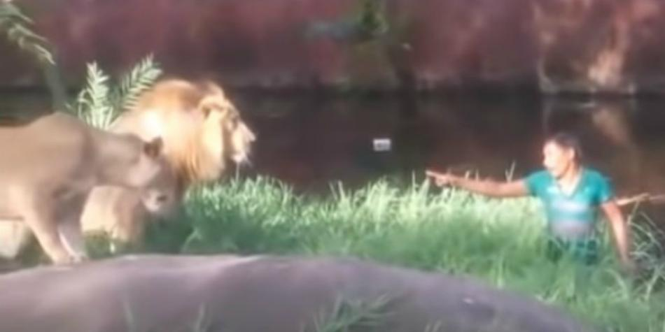 YouTube viral video: Man enters the habitat of a lion