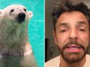 Facebook: Eugenio Derbez suplica para salvar a una osa polar [VIDEO]