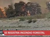 Pachacámac: se registra incendio forestal en el sector de Cardal | VIDEO