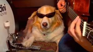 Este Golden Retriever se volvió viral tras tocar el intro de un canción de rock. (Foto: captura)