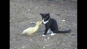 Un gato y un pato protagonizan un video que ha enternecido a miles de usuarios de YouTube. (Captura)