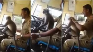 "YouTube: Chofer de bus que dejó ""manejar"" a mono fue suspendido en India 