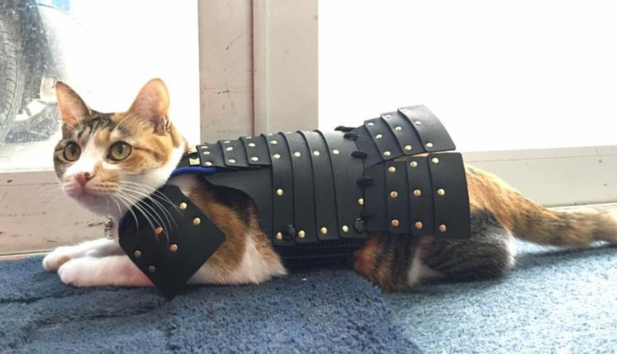 Gatos Samurai Facebook
