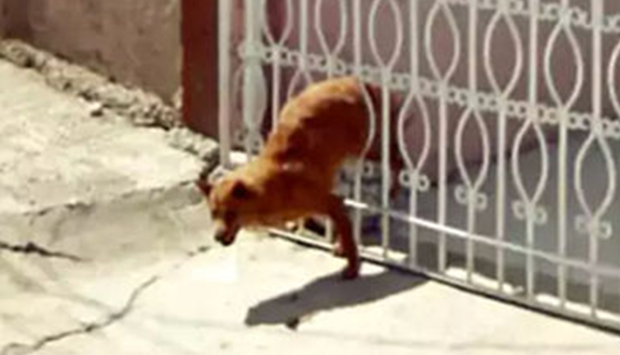Google Maps capta a un perro que protagoniza un fallido intento de escape . (Foto: Google Maps)