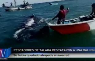 La noble acción de pescadores tras atrapar una ballena [VIDEO]