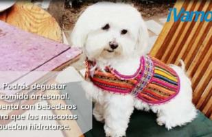 5 lugares pet friendly que puedes visitar en Lima