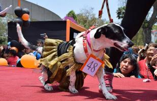 Evento canino tendrá doble propósito: divertir y concientizar