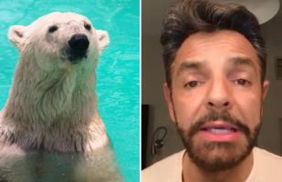 Facebook: Eugenio Derbez ruega para que salven vida de oso polar | VIDEO