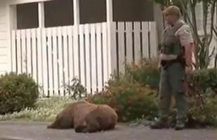 Facebook: La impactante captura de un oso pardo en California | VIDEO