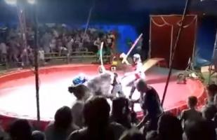 YouTube: Oso ataca a domador en pleno espectáculo de circo en Rusia [VIDEO]