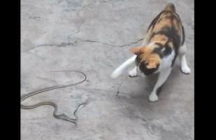 YouTube: pelea entre un gato y serpiente tuvo este inesperado final | VIDEO