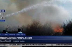 Pisco: incendio forestal se registró en San Andrés | VIDEO