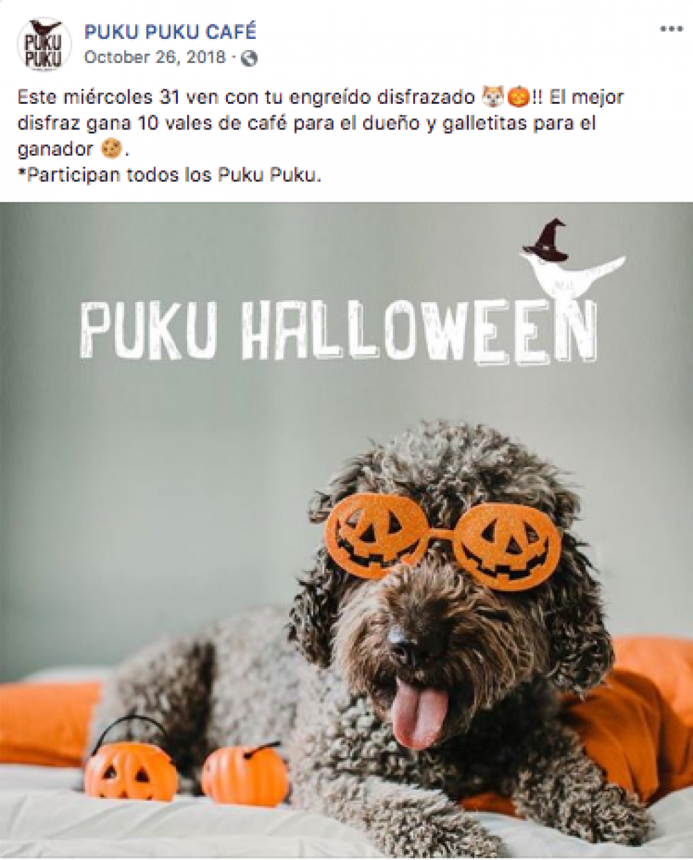 puku puku cafe pet friendly 2